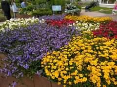 Kuvan mahdollinen sisältö: kukka, kasvi, ulkoilma ja luonto
