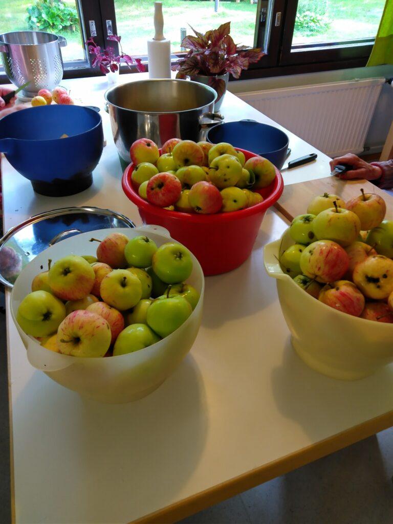 Sadonkorjuun aika on alkanut Villa Borgiksessa; oman pihan omenoista keitetään h...