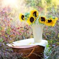Haikeat heit kesälle ja tervetuloa syksy! Kulttuuripaja Elviksen ryhmät ovat toi...
