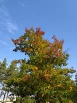Kuvan mahdollinen sisältö: puu, taivas, pilvi, kasvi, ulkoilma ja luonto