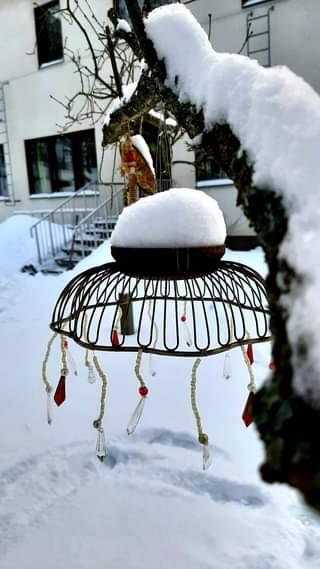 Kuvan mahdollinen sisältö: kasvi, lumi ja ulkoilma