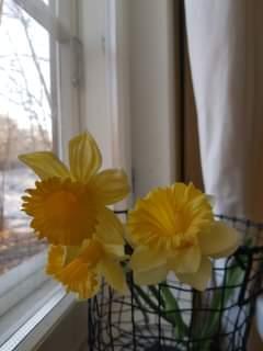Kuvassa voi olla kukka ja sisätila