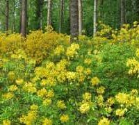 Kuvassa voi olla kukka, luonto ja puu