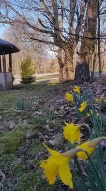 Kuvassa voi olla kukka ja luonto